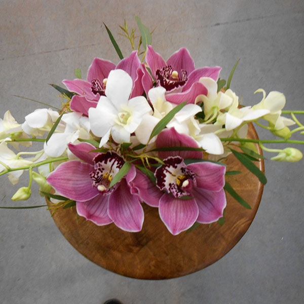 Composition dendrobium cymbidium