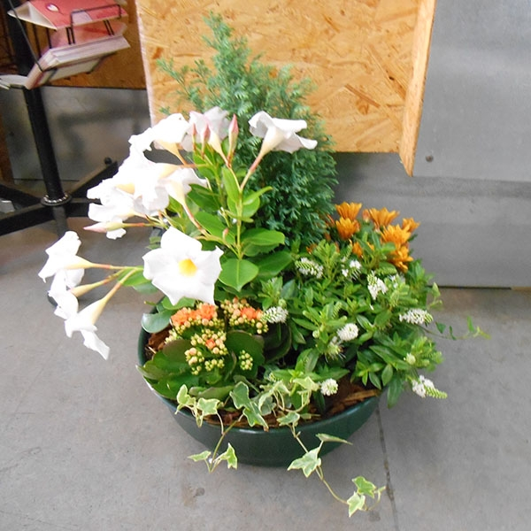 Coupe plantes orange blanc