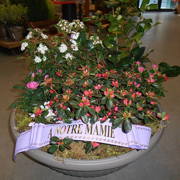 Coupe plantes rose blanc